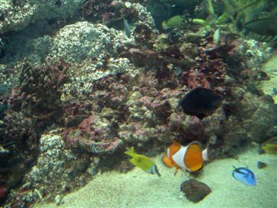 Sydney – Ausflug ins Aquarium