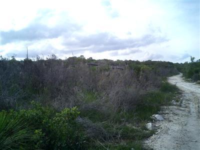 Sydney – Picknick in the bush